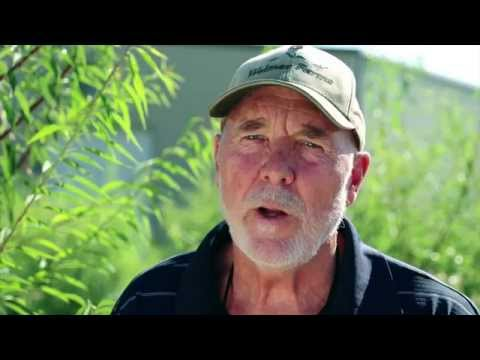 Meet Almond Grower, Bob Weimer