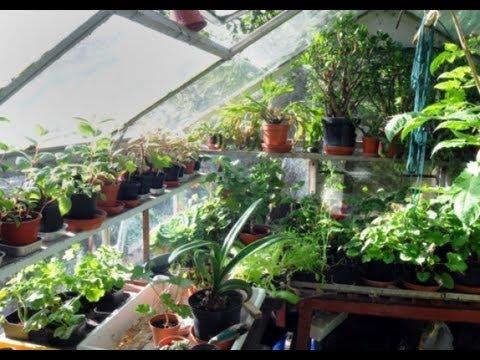Alok Jha's DIY green house