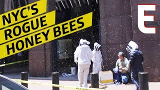 Capturing Sudden Swarms of NYC Bees To Make Honey by Eater