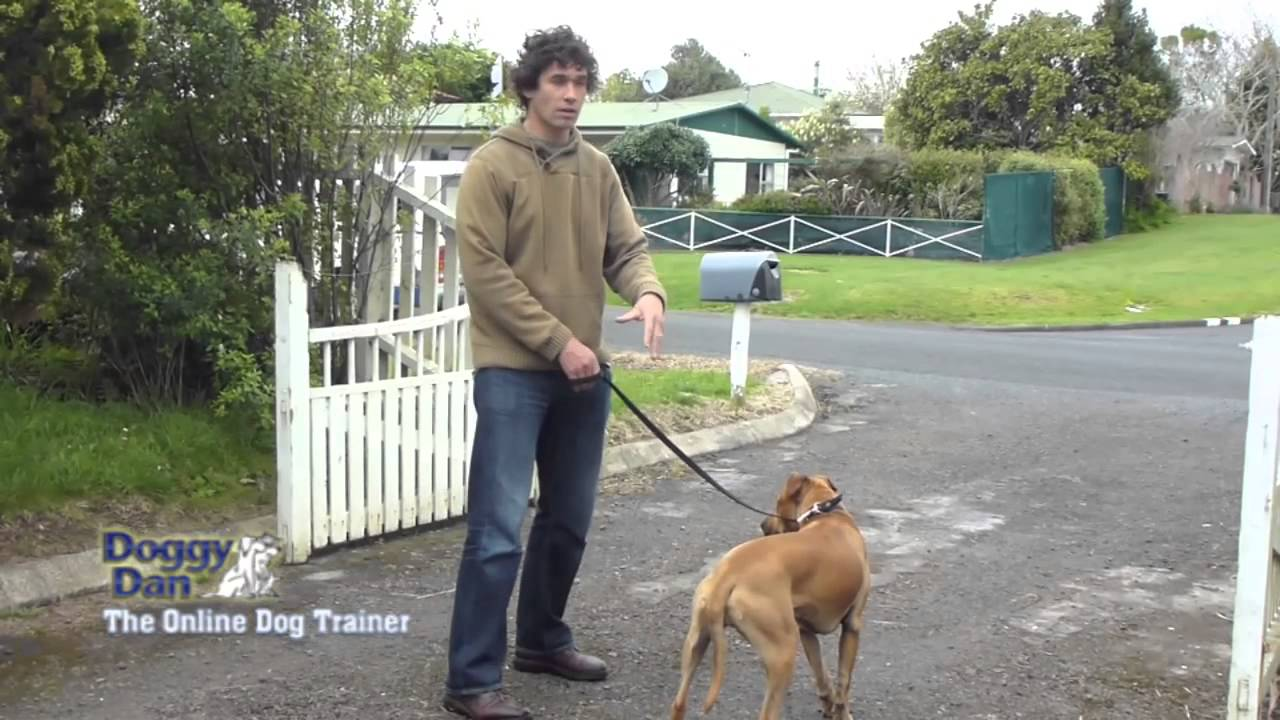 Leash Training Tips for Your Pet Dog