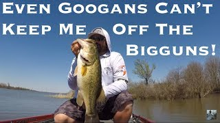 Video Lake Fork Sight Fishing For Giant Bass W/ Googans MP3, 3GP, MP4, WEBM, AVI, FLV Agustus 2018