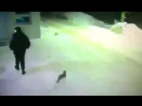 【どっち?】仲間とはぐれた猫が男に行先を訪ねる動画www【あっち】