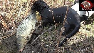Video Black Mamba Catching Big Fish | Episode 9- Black Mamba: Born to Hunt MP3, 3GP, MP4, WEBM, AVI, FLV Januari 2019