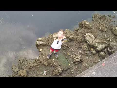 他們原本只以為烏龜是單純被卡住無法游泳,怎知撈上岸後發現牠們「殼被鑽洞並用鎖頭捆住」當場氣到狂飆髒話!