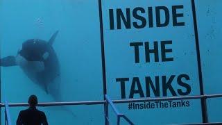 Video Inside The Tanks (Full Documentary) MP3, 3GP, MP4, WEBM, AVI, FLV Juni 2019