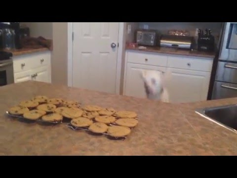WATCH: Dog Jumps to Smell Freshly Baked Cookies