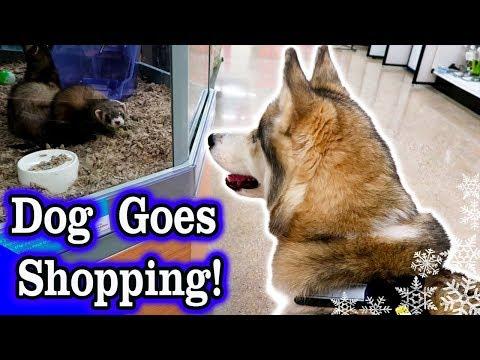 Dog Goes Shopping at Petco | Husky Petco Haul