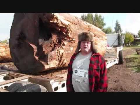 Tackling the Giant Redwood,Crazy Canadian Woodworking
