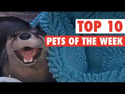 top ten degli animali più divertenti