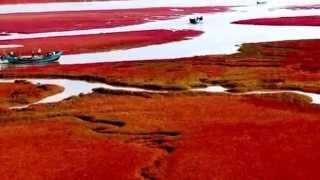 Panjin China  city photo : Natural wonders - Red beach Panjin (China)