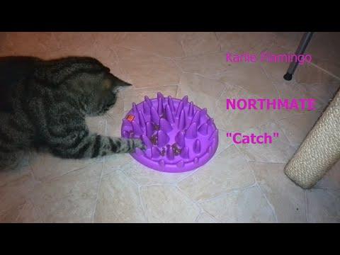 Carlo & der NORTHMATE Catch interaktiver Anti-Schling-Napf - Erstkontakt :D