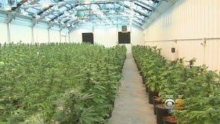Inside Medical Marijuana Grow Facility