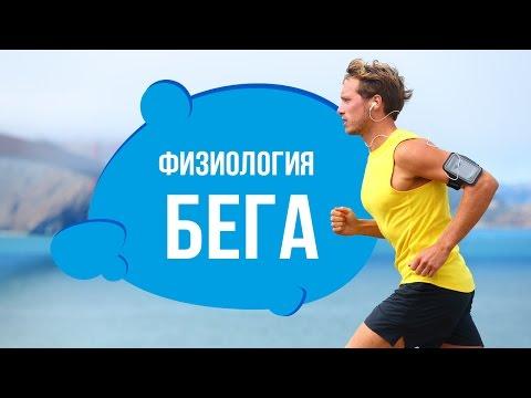Что происходит с организмом во время бега (видео)