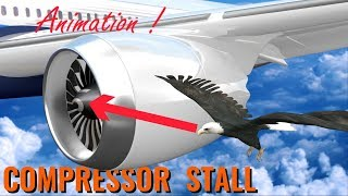 Video What makes BIRD STRIKES so dangerous ? MP3, 3GP, MP4, WEBM, AVI, FLV Maret 2019