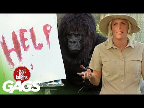 Best Of Just For Laughs Gags - Funniest Gorilla and Mouse Pranks - Youtube