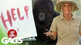 Best Of Just For Laughs Gags - Funniest Gorilla and Mouse Prank