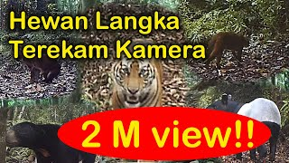 Download Video Penampakan hewan-hewan langka di hutan MP3 3GP MP4