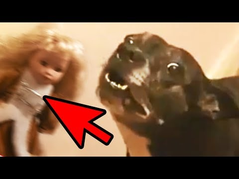 5 Dogs That Saw Something Their Owners Couldn't See - Ghosts & Paranormal