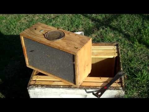 How to install a package of Honeybees