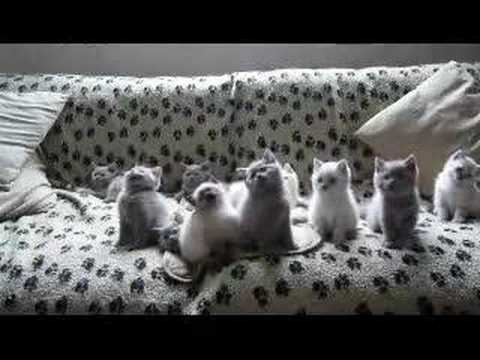 Kittens Be Jammin'