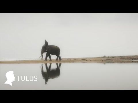 Tulus Gajah