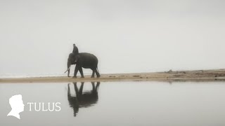 TULUS - Gajah (Official Music Video)