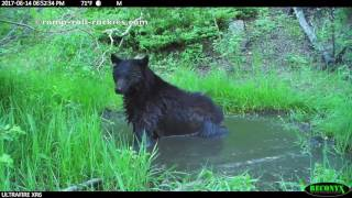 Video Mother Bear and Cub Take Baths! (June, 2017) MP3, 3GP, MP4, WEBM, AVI, FLV September 2017