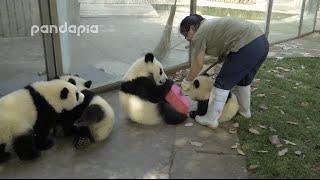 Z tymi Pandami nie chciałbyś pracować…