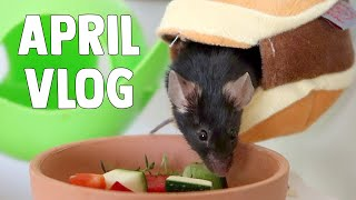 Spot Cleaning The Cages 🐹 Safe Pet Plants 🌿 March Vlog 💐 by ErinsAnimals