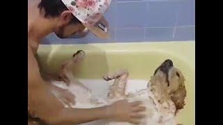 animale cainele la baie