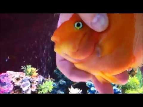 Slatko: Ribica koja voli da se mazi