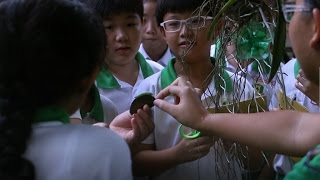 The NParks Biodiversity Week for Schools features a series of exciting activities for students of different levels to learn more about our rich flora and fau...