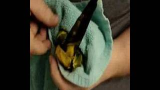 XxX Hot Indian SeX How To Clip A Birds Wings .3gp mp4 Tamil Video