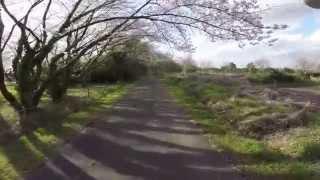空撮 / 秋ヶ瀬公園の桜