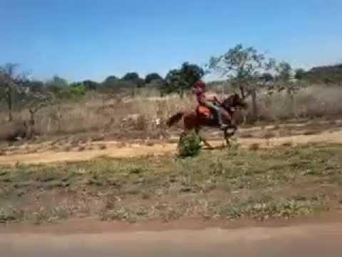 Cavalo esquipador conhaque de Padre Bernardo-GO