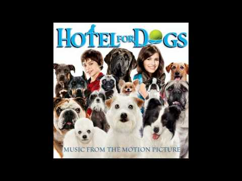 Into Action - Hotel For Dogs