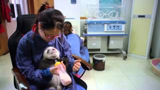 Nonton Pandas  The Journey Home Film Subtitle Indonesia Streaming Movie Download