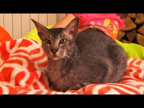 Сюжет ТСН24: Туляки отмечают всемирный день кошек