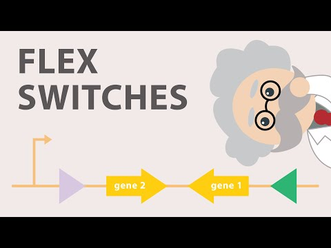 Conditional gene expression using the Cre Lox FLEx vector switch!