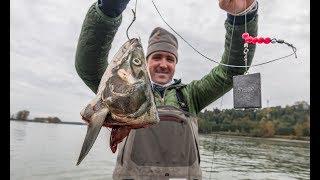 Fishing For Giant Prehistoric River Monsters