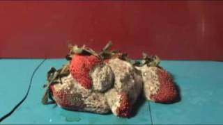 Rotting Strawberry