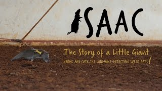 Isaac. The Story of a Little Giant. Heroic and cute, the landmine-detecting super rats!