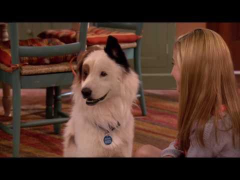 Смотри Сериалы Disney Все Серии Подряд - Собака точка ком - Сезон 1 Серии 10,11,12 (видео)