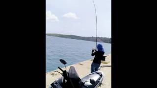 Download Video aceh mancing mania.. MP3 3GP MP4