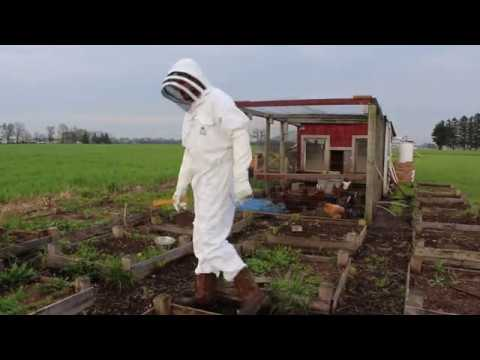 What's Your Unique Hobby?: Bee Keeping