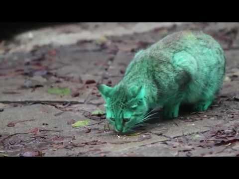 قطة خضراء
