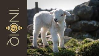 Beddgelert United Kingdom  city pictures gallery : Pet Friendly Holiday Cottage Near Beddgelert | Nanmor