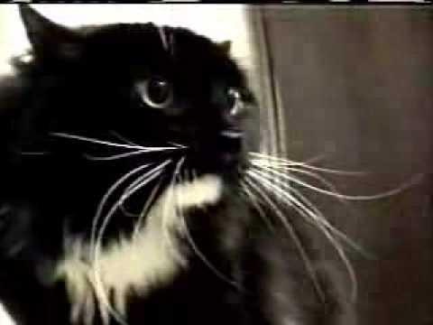 Говорящий кот=).flv (видео)