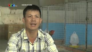 Tư Vấn Nuôi Gà Đông Tảo - Gà Tiến Vua Trang Trại Gà đông Tảo Thành Minh-Traigadongtao.com.vn