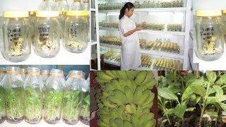 Plant biotechnology 4